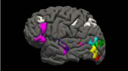 3D brain, with functional regions highlighted in color
