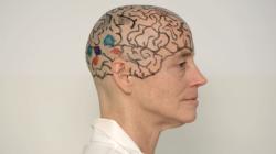 The Neuroanatomy Lesson (Director's Cut)